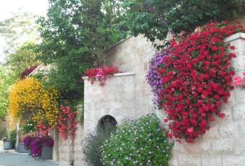 flowers in Jerusale