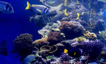 Fish swimming among coral at the Eilat Underwater Observatory