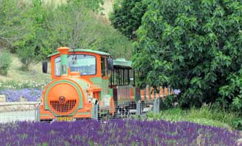 train at Jerusalem botanic gardens