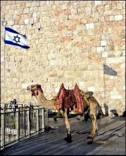 camel in Jerusale