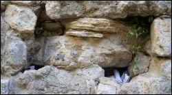 prayers in Western Wall i Jerusalem