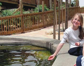 Feeding the fish at the Jerusalem Biblical Zoo